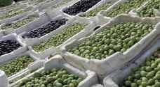 %99 من صادرات الزيتون الأردني ذهبت لإسرائيل