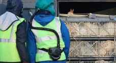 إيران تعدم مئات آلاف الطيور مع انتشار 'إنفلونزا الطيور'