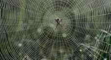 العلماء يجدون طريقة لتصنيع نسيج العنكبوت