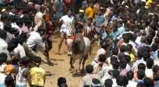 بعد الاحتجاجات.. عودة مهرجان ترويض الثيران بالهند