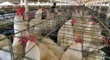 ظهور نوع جديد من إنفلونزا الطيور في ألمانيا