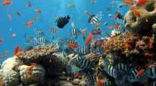 دراسة: الأسماك في خطر بسبب الاحتباس الحراري