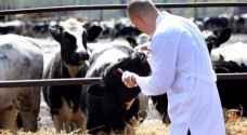 ظهور الحمى القلاعية في المملكة .. والزراعة تتابع