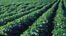 الحكومة تشكل لجنة للتأكد من سلامة المنتجات الزراعية