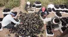 الزراعة تنفي إدخال خضار مرفوضة صحيا إلى الأسواق المحلية