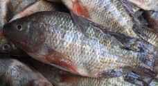 ربع طن من أسماك البولطي محشوة بالحشرات في إربد