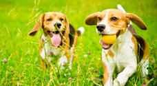 كيف يحسن اقتناء الكلاب صحة كبار السن؟