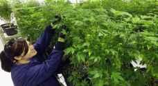 شركة تشتري بلدة أمريكية بأكملها من أجل إنتاج الماريجوانا!