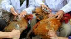 الفلبين تسجل ثاني حالة تفش لإنفلونزا الطيور