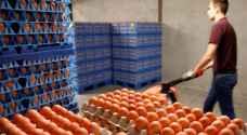 إيطاليا.. ضبط كميات كبيرة من 'البيض المرعب'