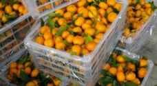 رفض دخول ٤٠ صندوق برتقال محلي الى السوق المركزي