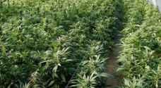 أحكام مشددة بحق تجار مخدرات