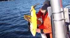 روبوت سمكة لرصد معدلات تلوث الماء