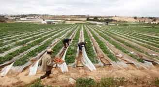 تحذيرات من 'الزراعة' بشأن المنخفض القادم