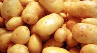 الزراعة تسمح باستيراد البطاطا من فلسطين