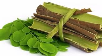 المورينغا.. النبات الذي يعالج السرطان وينظم السكري