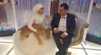 ماذا لو كان أسد برفقة عروستك في حفل زفافك؟