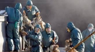 فرنسا تعدم 600 ألف بطة في إطار مكافحة أنفلونزا الطيور