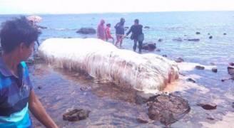 ..بالفيديو والصور .. كائن بحري يثير الحيرة في الفلبين !
