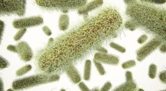 تعرف على فوائد البكتيريا المسببة للتسمم الغذائي؟