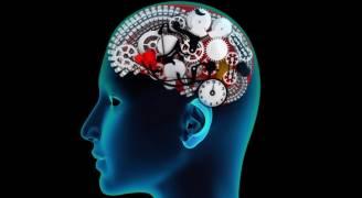 دراسة تكشف عمل الذاكرة عند الإنسان