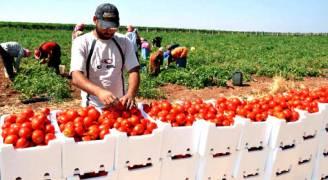 قرار الإمارات 'مسمار أخير' يدق بنعش الزراعة الأردنية