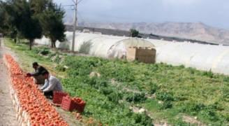 الزراعة: الفحوص أثبتت وجود مبيدات ضارة في عينات الخضار المحلية