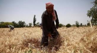 الحكومة السورية ترفع سعر القمح لتعويض مزارعيها