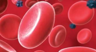 ١٦٥٠ مريض ثلاسيميا في الاردن