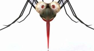 رب ضارة نافعة.. فيروس زيكا لعلاج السرطان