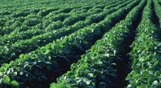 نقيب المهندسين الزراعيين: المنتج الزراعي الاردني آمن