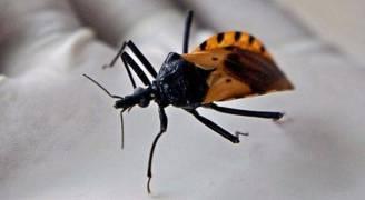 انبتهوا من حشرة البق في منازلكم فهي قاتلة