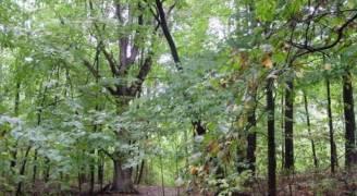 مذكرة تفاهم للحفاظ على الأنواع النادرة من الأشجار الحرجية