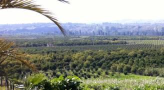 الزراعة: ١.٦ مليون دونم مساحة الاراضي الحرجية في المملكة