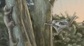 اكتشاف 'ثدييات طائرة' حلقت فوق الديناصورات