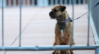 محكمة فرنسية تقضي بالسجن ٦ أشهر على رجل ضرب كلبَه