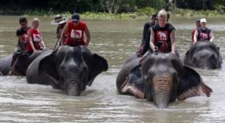 الأفيال تنقذ المئات بحديقة حيوان غمرتها السيول في نيبال