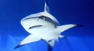 القرش والإنسان.. 'الخرافة التاريخية'