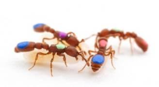 سم الحشرات يعالج الصدفية