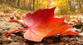 الاعتدال الخريفي الجمعة المقبل