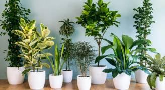 نباتات المنزل مهمة لصحتك..فيديو