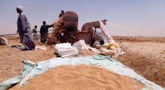 مصر تأمر بغربلة قمح فرنسي فيه بذور خشخاش