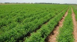 اسعار المنتجين الزراعيين ترتفع بنسبة ١٣%