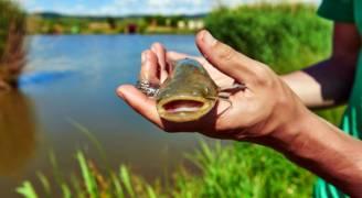 بريطانيا.. سمكة بطول '١٤ سم' كادت أن تقتل رجلا