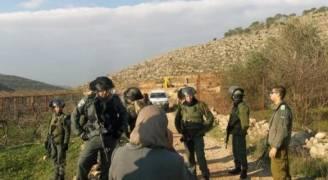 مستوطنون يسرقون ثمار الزيتون في نابلس ورام الله