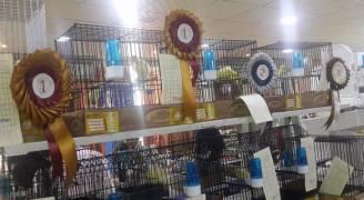 معرض ومسابقة لطيور الزينة في عمان.. صور