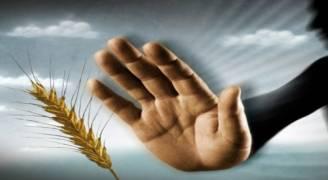 حساسية القمح الاعراض وسبل العلاج .. فيديو