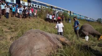 قطار هندي يصدم فيلين نادرين ويقتلهما.. صور