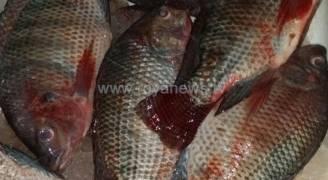 ضبط وإتلاف ١٥٠ كغم سمك فاسد في إربد
