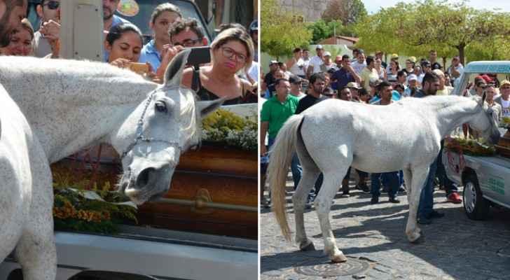 الحصان البرازيلي